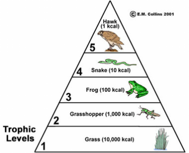 habitats  food chains  u0026 webs  trophic pyramid